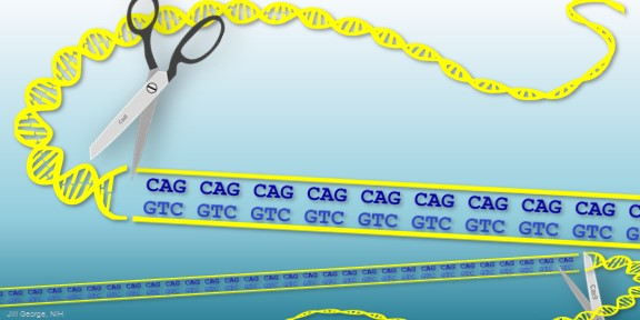 Huntington's Disease: Gene Editing Shows Promise in Mouse ...