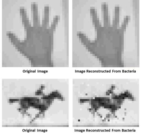 Original vs. CRISPR stored images