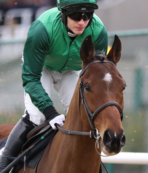 Footpad is Punchestown Festival bound for the Willie Mullins team