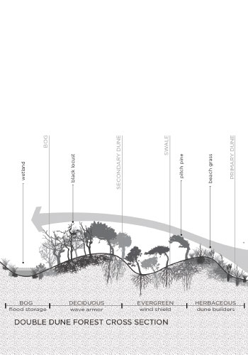 Local-Office_Double-dune-cross-section