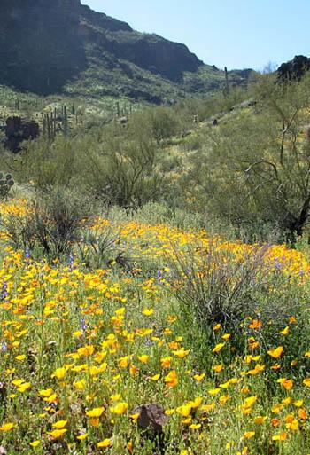 Sonoran desert plant communities / Gateway to Sedona