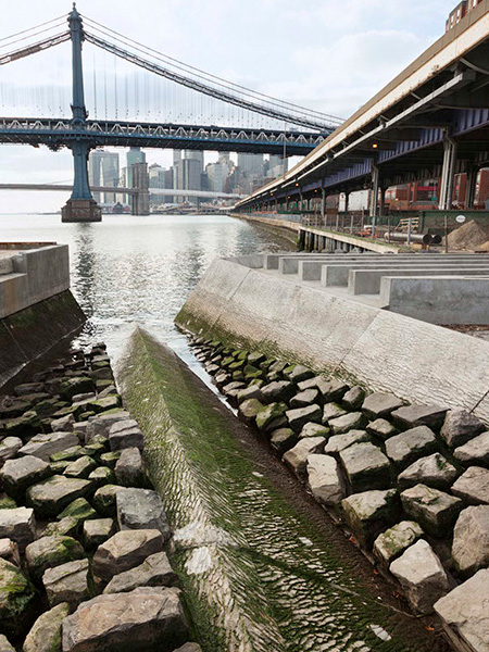 East River Waterfront mussel habitat pilot project / Ken Smith Workshop