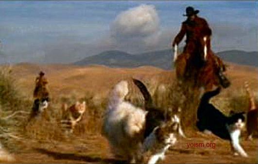 Coaching Pee-Wee Flag Football is Like Herding Cats (1/3)