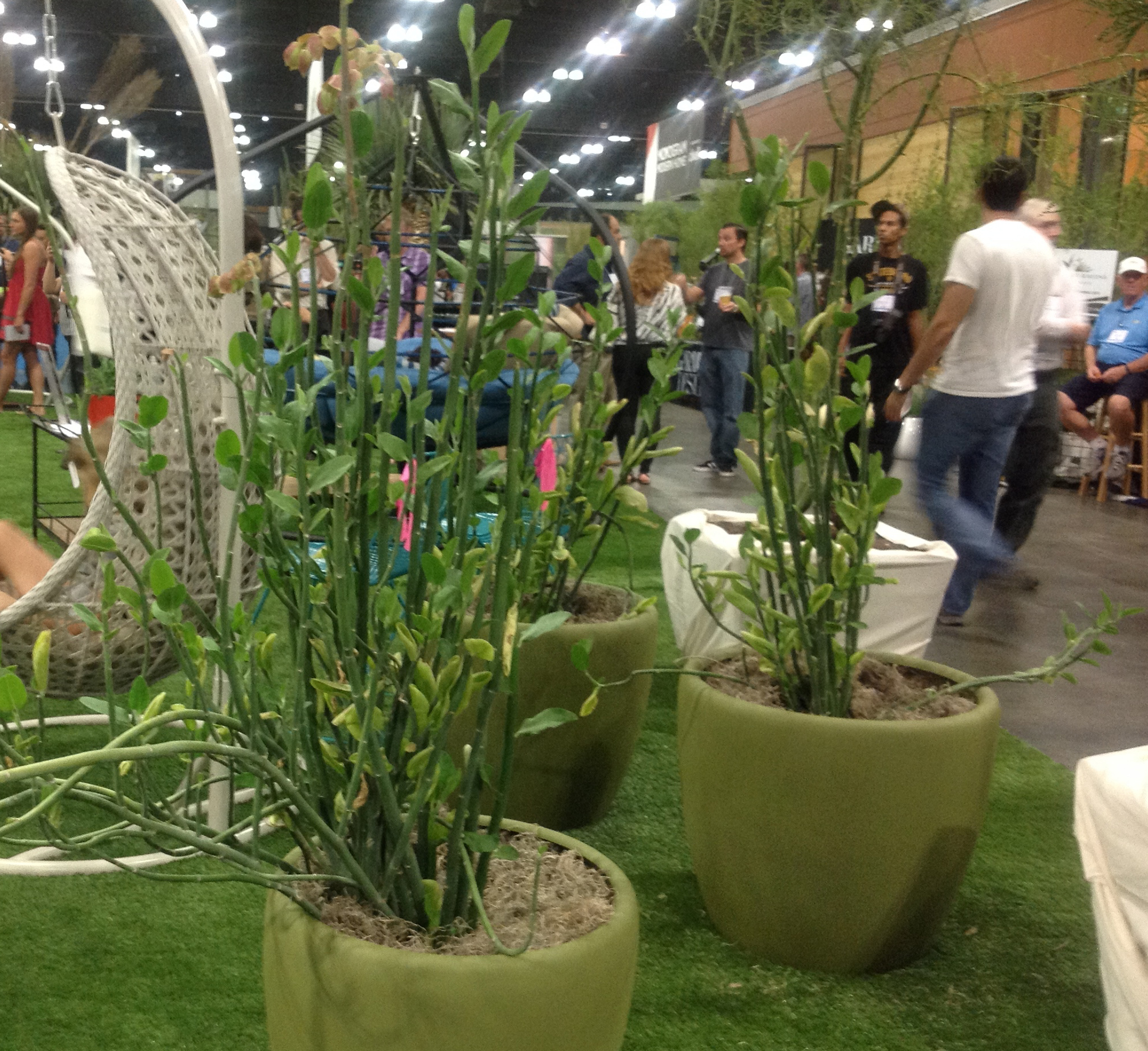 Dirt Diva Designs All Things Landscape
