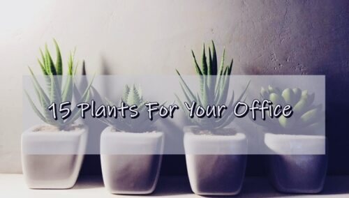15 Plants For Your Office Desk or Business That Look Amazing