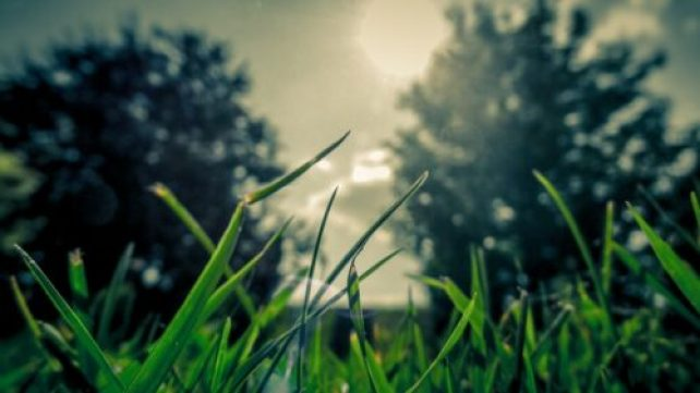 What Makes The Green Grass Grow
