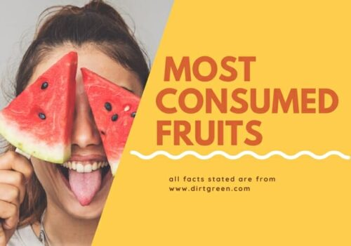 15 Most Consumed Fruits In The World People Love To Eat
