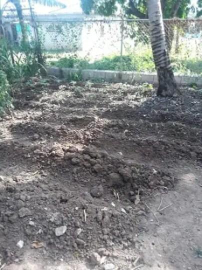Dirt Green Garden