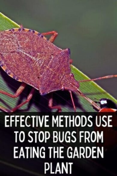 How To Stop Bugs From Eating The Garden Plants?