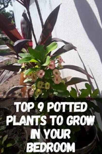 Top 9 Potted Plants To Grow in Your Bedroom