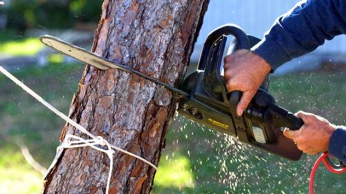 How Much Does it Cost to Remove a Tree From The Yard?