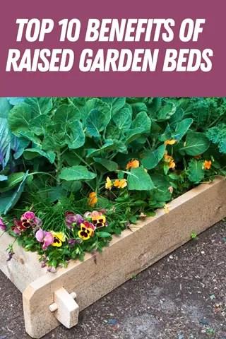 Benefits Of Raised Garden <!-- WP QUADS Content Ad Plugin v. 2.0.27.4 -- data-recalc-dims=