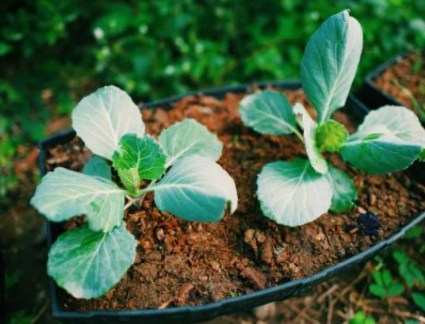 Vegetables To Grow In A Container