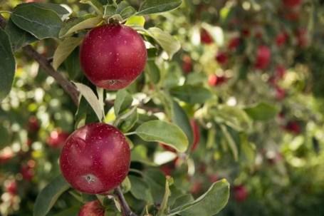fastest fruit trees to grow