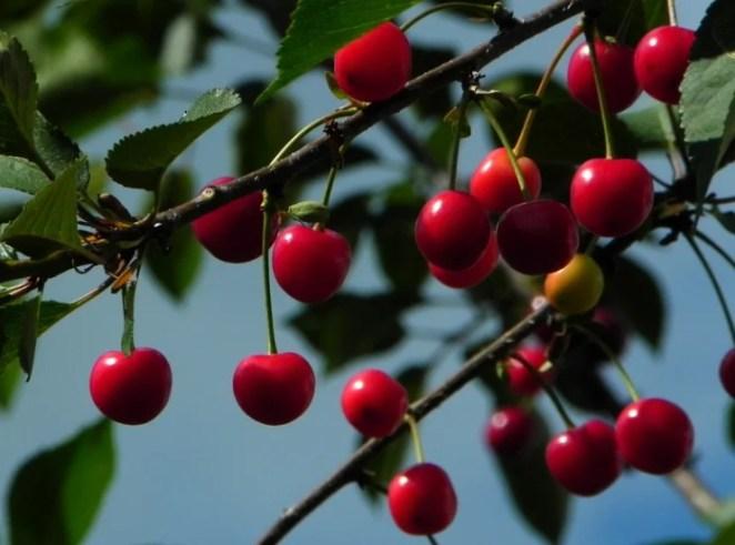 Low Maintenance Fruit Trees