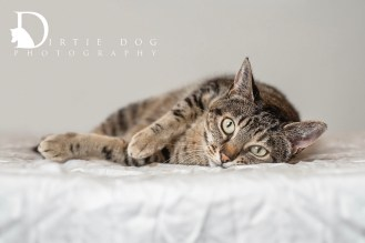 My second favorite image of Rush from Pasado's Safe Haven. This #WhynotMEpets feature is still waiting for her forever home. Seattle pet photography. www.dirtiedogphotography.com
