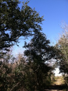 Oak canopy is the perfect stop for weary travelers.