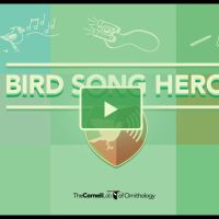 Bird Song Hero - Learn to SEE Bird Song