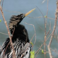 Backyard Feathers: The Best of 2016 Birding (Part 1)