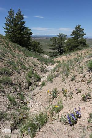 Wildflower Ridge