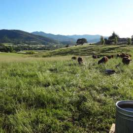 Radical Ranching at the Forefront of the Soil Health Revolution