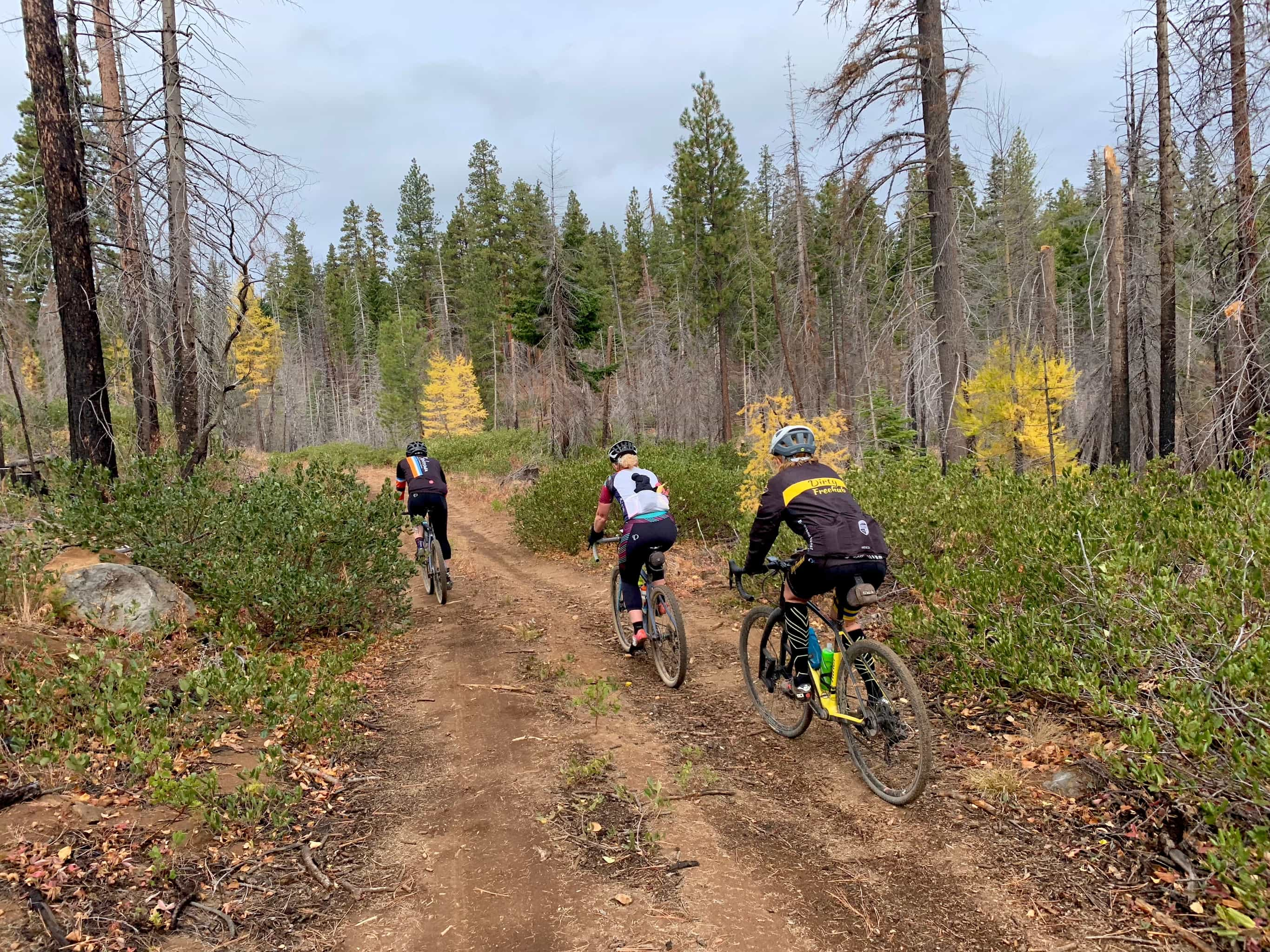 Three gravel bike riders on primitive forest roads.