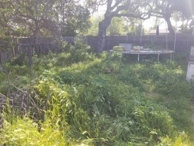 Overgrown Yard Cleanup Service in Arroyo Grande, Ca