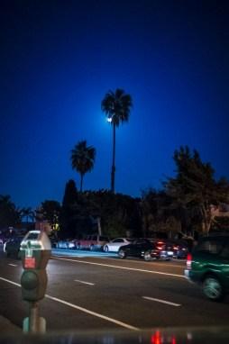 moon hides behind a palm tree