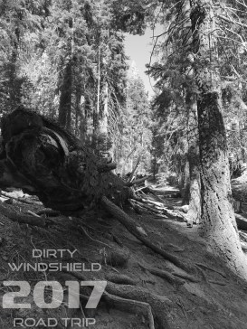 Just a Fallen Branch Black and White, Sequoia National Park, Dirty Windshield Road Trip