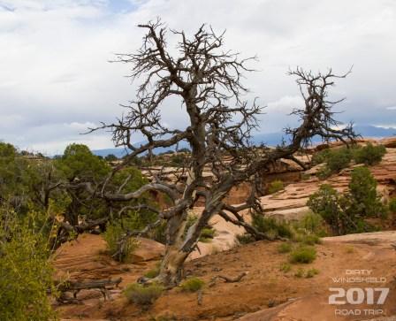 Gemini Bridges has some cool trees