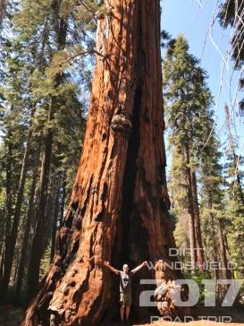 Tree that dwarfs, Sequoia National Park, Dirty Windshield Road Trip