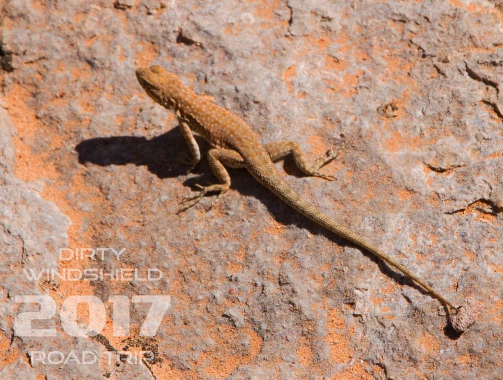 Red Dirt, Red Lizard