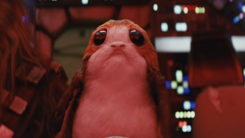 A porg, a sea-dwelling bird from the Star Wars universe with large round dark eyes and a sad face. Unbearably cute.