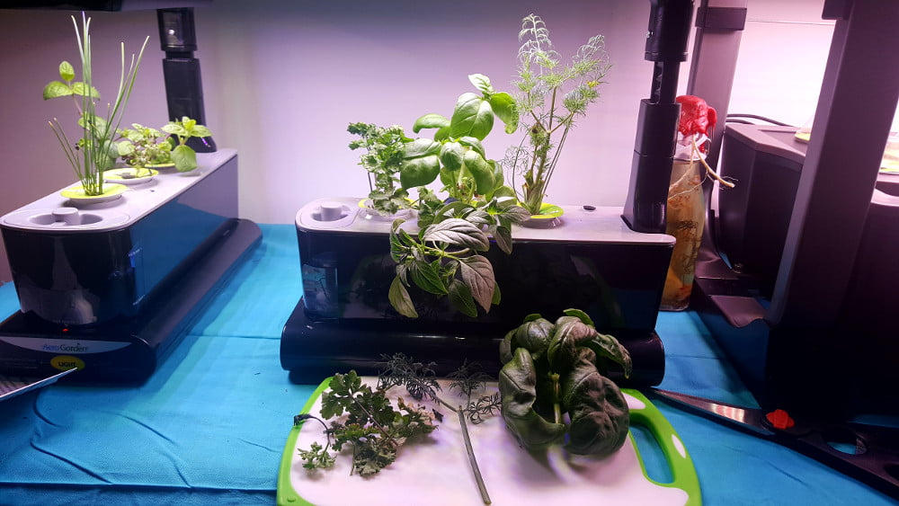AreoGarden Sprout LED week 6 after harvest; cutting board in the foreground containing the harvested parsley, dill and basil.