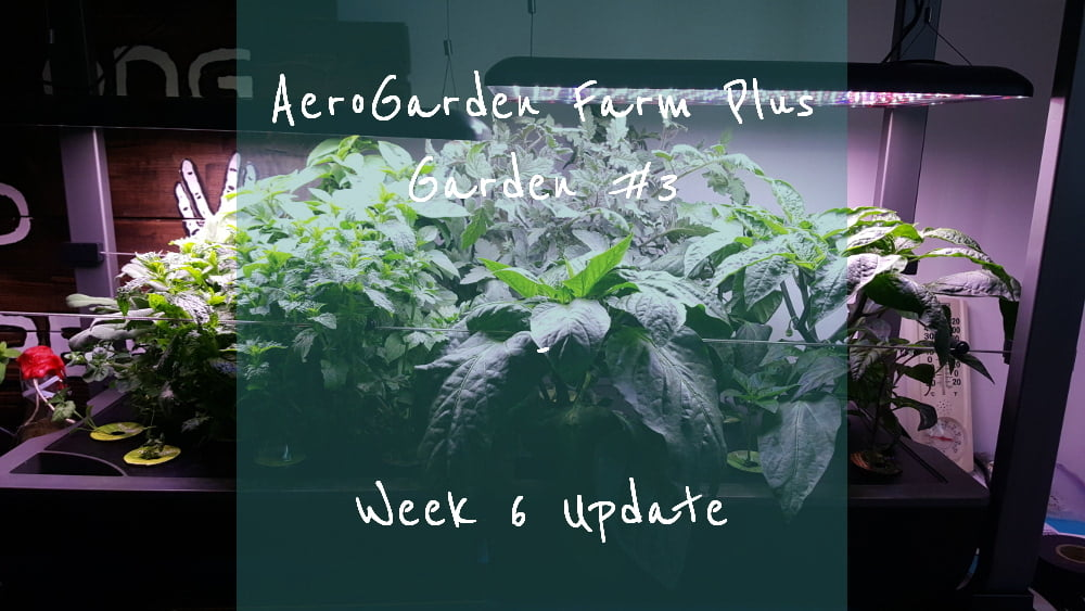 AeroGarden Farm Plus Week 6 title card
