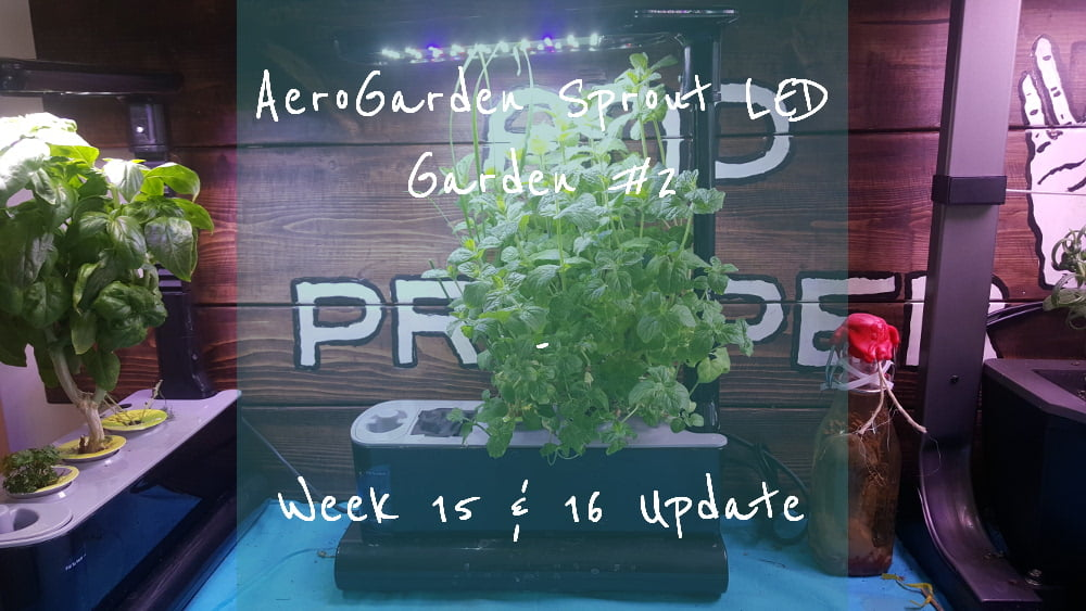 AeroGarden Sprout LED Garden 2 Week 15 and 16 title card