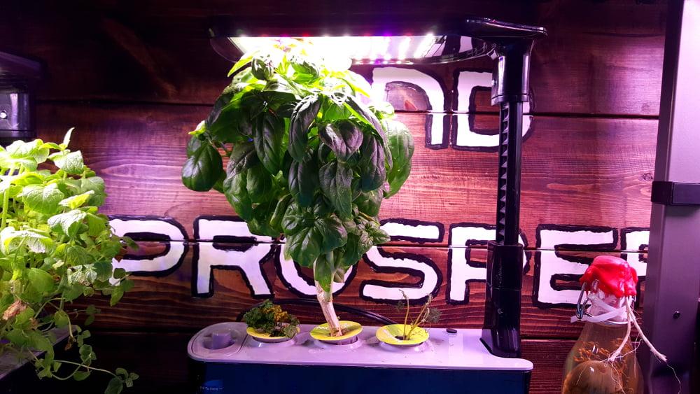 AeroGarden Sprout LED Garden 1 Week 17 before harvest