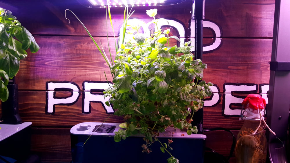 AeroGarden Sprout LED Garden 2 Week 17 before harvest