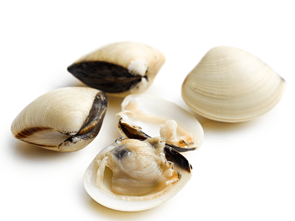 Imported Clam