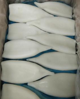 Imported Squid Tube