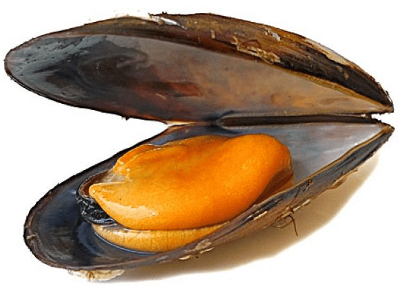 Double Shell Mussels