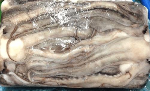 Tentáculo de Jibia (Rejo)
