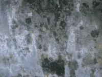toxic black mold growth on drywall due to water damage from monsoon flooding in Scottsdale, AZ