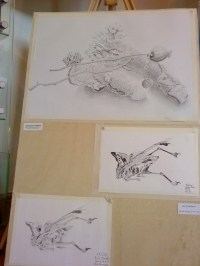 Graphite Still life, Charcoal bird skeleton, Graphite bird skeleton