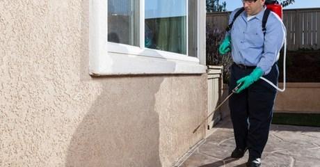 Choice of Pest Control Service