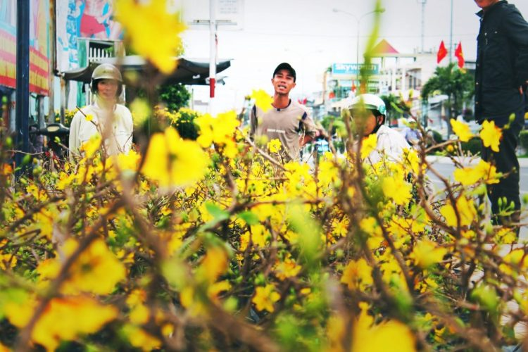 Spring Flower Festival Nha Trang