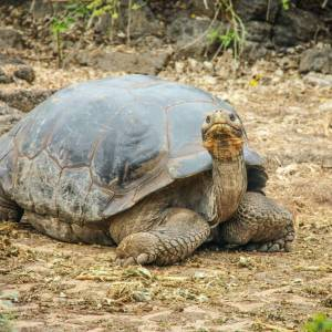 Galapagos Cruise Loops: Which One Is Best?