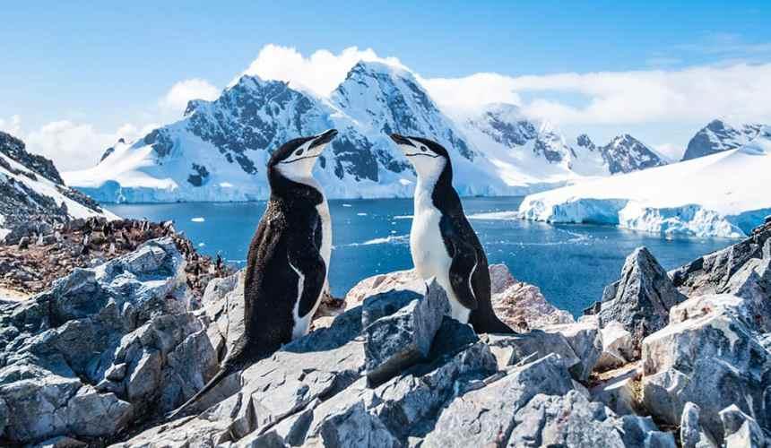 Antarctica Cruises: Falkland Islands, Argentina & More