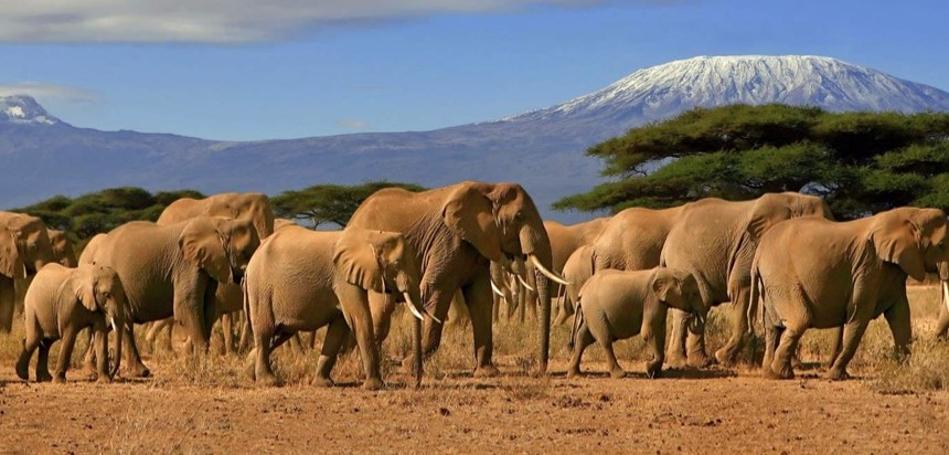 Kenya & Tanzania Wildlife Safari
