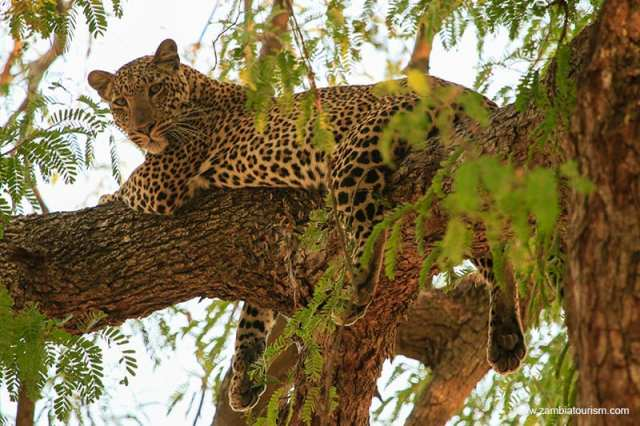 Wildlife National Parks in Zambia - Zambia Tourism
